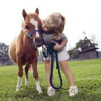 The origin of miniature horses is subject to debate, but historical records reveal small horses were companions of early royalty in the 17th century. Although their small size makes them easier to keep, the majority of their care is identical to that of a full-size horse. Miniature horses do, however, have different housing, feeding, immunization....
