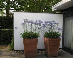 Styling tuin & terras
