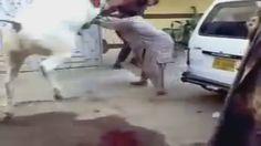 Angry cow qurbani || 2016 || Professional Qasai || Funny || Eid ul adha |