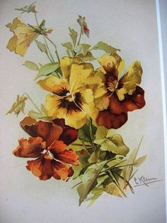 c.1890's PANSY Print Catherine Klein Antique Victorian Chromolithograph