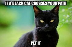 Absolutely! Both my babies are black cats. I can't believe there is still superstitious people that won't have a black cat. They are least likely to get adopted at shelters. Idiots! Always