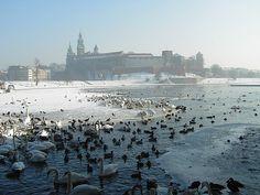 Zima pod Wawelem, Kraków