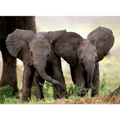 Two baby elephants! I love elephants and treasure my experiences with them!