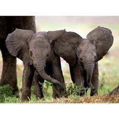 Two baby elephants! I love elephants and treasure my experiences with them!