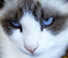 beautiful kitty cat