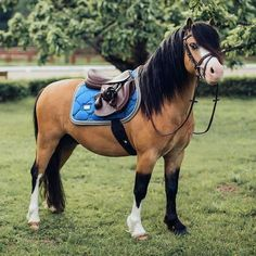 Most Beautiful Horses, Pretty Horses, Horse Girl, Horse Love, Poney Welsh, Horse Markings, Mini Pony, Welsh Pony, Cute Ponies