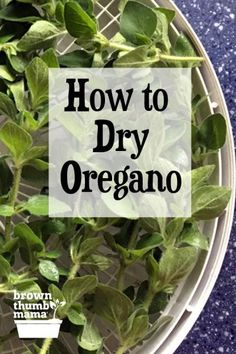It's easy to dry oregano from your garden. Once you've dehydrated oregano, you can add its delicious flavor to your spaghetti sauce, meatballs, soups, and more. French Fry Seasoning, Homemade Taco Seasoning Mix, Seasoning Mixes, Drying Herbs, Oregano Plant, Oregano Recipes, Gardens, Bon Appetit, Vinaigrette