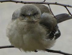 bird19