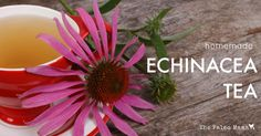 Echinacea is one of the best-known herbal remedies and the whole plant (roots, leaves, flowers) can be used to make a homemade Echinacea tea!