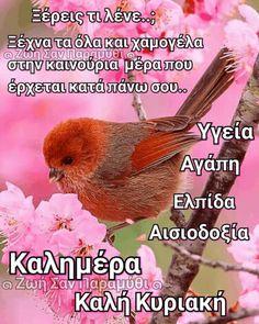 Good Morning, Greece, Sayings, Pictures, Beautiful, Bom Dia, Photos, Buen Dia, Bonjour
