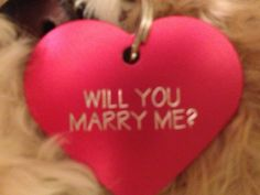 someone please show my boyfriend this! Proposal with help from a dog... except, I would want it to say 'will you marry us?'