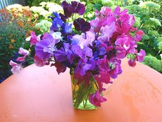 When you plant sweet peas in March, be sure and include a few bi-colors.