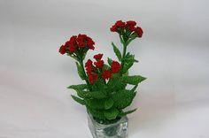 The fireballs flowers