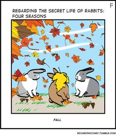 The Secret Life of Rabbits: Autumn Cutest Animals On Earth, Animals And Pets, Funny Animals, Cute Animals, Bunny Meme, Funny Bunnies, Cute Bunny, Funny Rabbit, Pet Rabbit