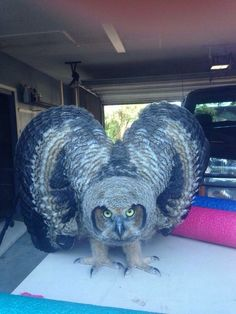 Saw this frightening guy in my garage - Imgur