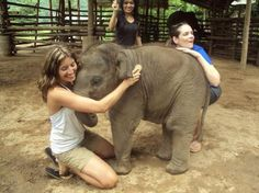 Elephant Nature Park, Chiang Mai, Thailand. No tricks or riding, just elephants living freely and receiving good care.