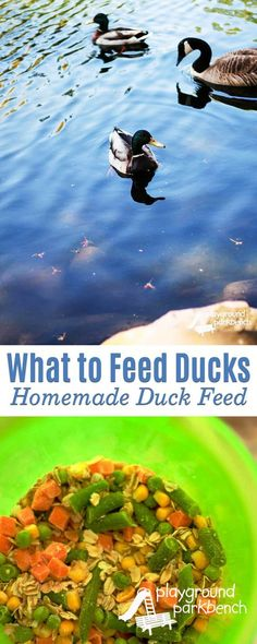 For generations, children have been reading Make Way for Ducklings, inspiring countless trips to the local pond to feed and visit the ducks.  What most don't know is that bread and crackers are the worst food to feed these birds.  Learn why and what you s