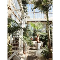 Interior from the amazing palm tree house in the Garden Society of Gothenburg (Trädgårdsföreningen). Photo by Lisa Marie Andersson, @upthewoodenhills, thank you for sharing!