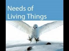 Basic Needs of Living Things Video for kids