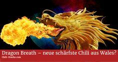 Ein Chilizüchter aus England hat nach eigenen Angaben eine neue schärfste Chili der Welt gezüchtet. Wenn es sich bewahrheitet, dass diese 2,48 Millionen Scoville hat, dürfte Dragon Breath schon bald die Carolina Reaper mit 1.569 Mio. Scoville Heat Units (SHU) als schärfste Chili ablösen.