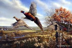 This image shows just how far and long some farm fields can go as the pheasants take off in flight.