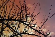 Branches by Ivan Popov on 500px