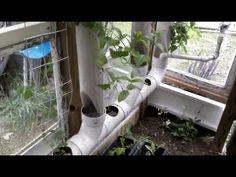 Acuaponia casera de cultivos verticales -seguimiento-