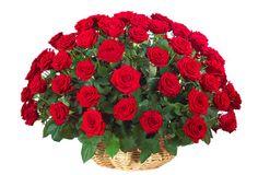 Poklonite voljenoj osobi 101 ružu – crvene ili bele (korpa + sundjeri). Plati 5.600rsd umesto 12.000rsd! BLIC KUPON obezbeđuje popust 53%