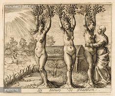 Phaeton, Phaetusa, Lampetia and Lampetusa are changed into poplar trees