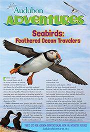 Multiple text structures. Downloadable magazine about seabirds from Audubon Adventures.