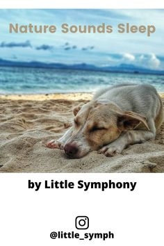Nature Sounds Sleep, a playlist by peter. Calming Music For Kids, Relaxing Music, Westie Puppies, Nature Music, Nature Sounds, Sound Of Music, Haha Funny, Musical Instruments, How To Fall Asleep