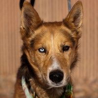 Mackey is an adoptable Husky Dog in Denver, CO. Well, life on a farm is kinda laid back Aint much an ol country boy like me can hack Its early to rise early in the sack Thank God Im a country boy A si...