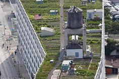 NYC - Roof Top Farm