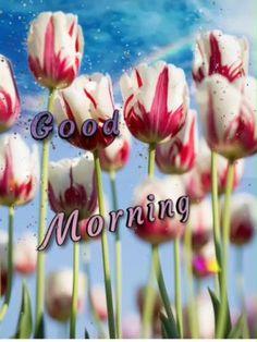 Good Morning Gif Disney, Good Morning Video Songs, Good Morning Coffee Gif, Good Morning Sunday Images, Good Morning Beautiful Pictures, Good Morning Love Messages, Good Morning Animation, Good Morning Greetings, Good Night Quotes
