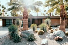 Alternatives to Grass : Front Yard Landscaping Ideas Lawn alternative - desert landscaping