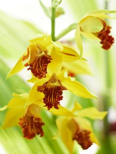 easy to understand tips for buying orchids & not killing them within a week