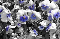 taken by Danielle Andrew http://whurrledpeas.deviantart.com/