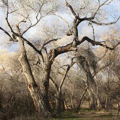Trees and Shrubs - Montezuma Castle National Monument (U.S. ...