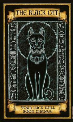 What Are Tarot Cards? Made up of no less than seventy-eight cards, each deck of Tarot cards are all the same. Tarot cards come in all sizes with all types Fortune Cards, Fortune Telling Cards, Bastet, Arte Black, Oracle Cards, Book Of Shadows, Oeuvre D'art, Tarot Cards, Crazy Cats