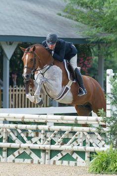 Andalusian Horse, Friesian Horse, Arabian Horses, Palomino, Majestic Horse, Beautiful Horses, Horse Riding Clothes, Horse Shirt, English Riding
