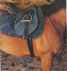 Equestrian Style-  Plaid Saddle Pad From Tartan, Romancing the Plaid