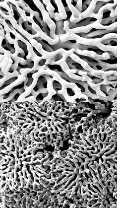Scanning electron micrograph of a vascular corrosion cast depicting the sinusoidal network in a mouse liver.