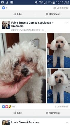 Sanitary clipping dog grooming tips grooming pinterest dog repinned before after dog grooming images solutioingenieria Gallery