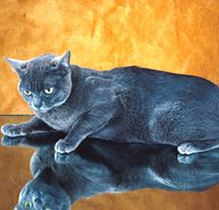 The Korat Cat Breed: Korats are not as vocal as their Siamese comrades; they have other ways of getting their wishes across. At dinnertime they'll wrap themselves . Cool Cats, Cute Cats And Kittens, Blue Cats, Grey Cats, Korat Cat, How To Cat, Sleeping Kitten, Cat Character, Russian Blue
