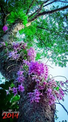 Orquideas en tronco