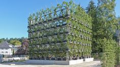 Trees are being transformed into living, breathing buildings! >> German design group specializes in organic structures grown over the course of decades. Tower Building, Green Building, Green Architecture, Landscape Architecture, Sustainable Architecture, Green Facade, Organic Structure, Urban Farming, Sustainable Design