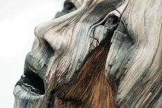 Une sélection des créations de l'artiste américainChristopher David White…