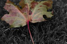 Original Artwork, Plant Leaves, Fine Art Prints, Artist, Artists