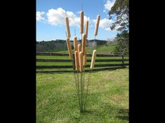Macrocapa Reeds