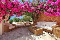 A #Bougain #villa #Patio #Garden